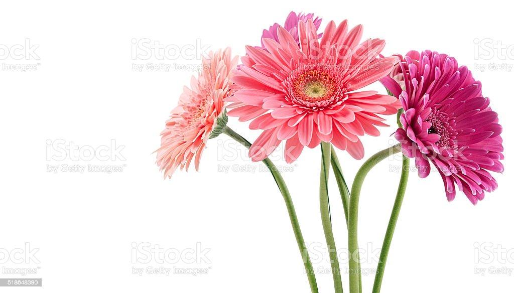 bouquet coloré de gerberas - Photo
