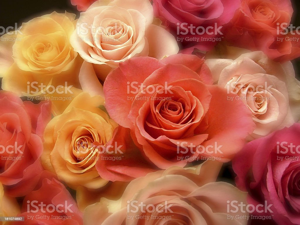 Colorful Bouquet of Roses royalty-free stock photo