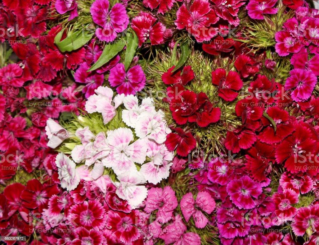 Colorful bouquet 免版稅 stock photo
