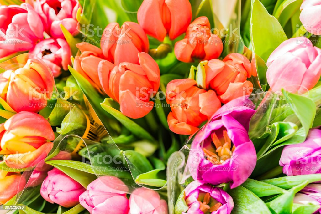 Colorful Bouquets Of Tulips Spring Flowers Stock Photo More