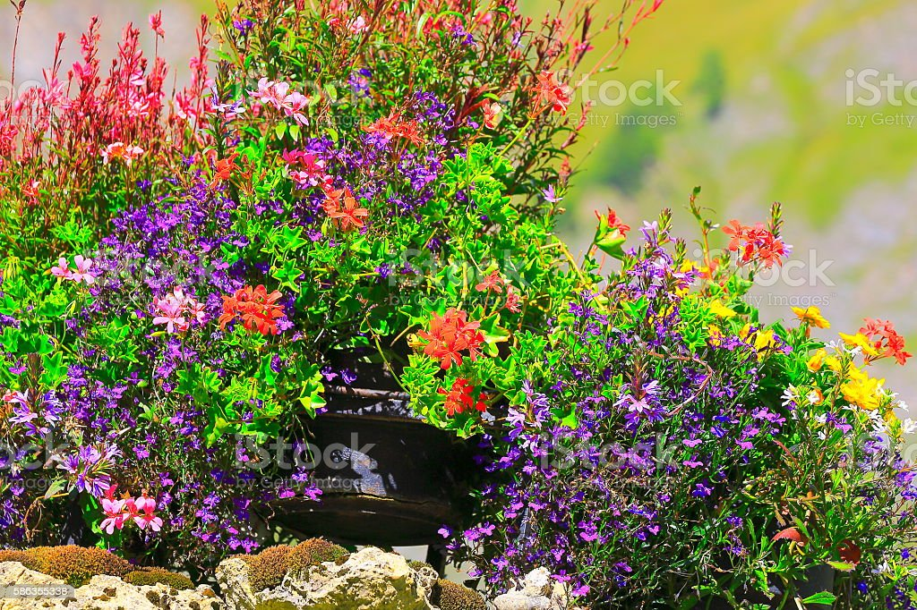 Colorful Bright flowers, garden and plants foliage background – Foto