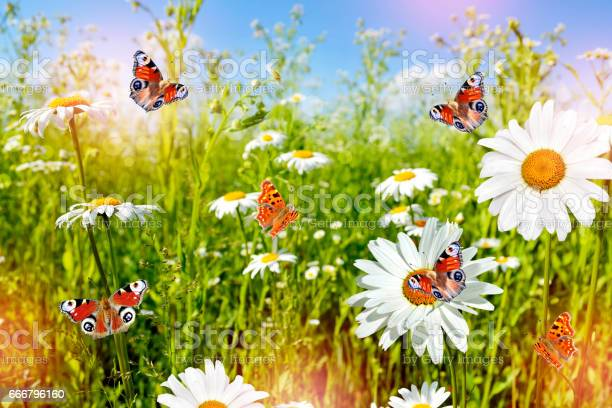 Colorful bright flowers picture id666796160?b=1&k=6&m=666796160&s=612x612&h=gm8xkm5plzmyohhirpppug5qy28ywx3rfn4p3i f3z4=