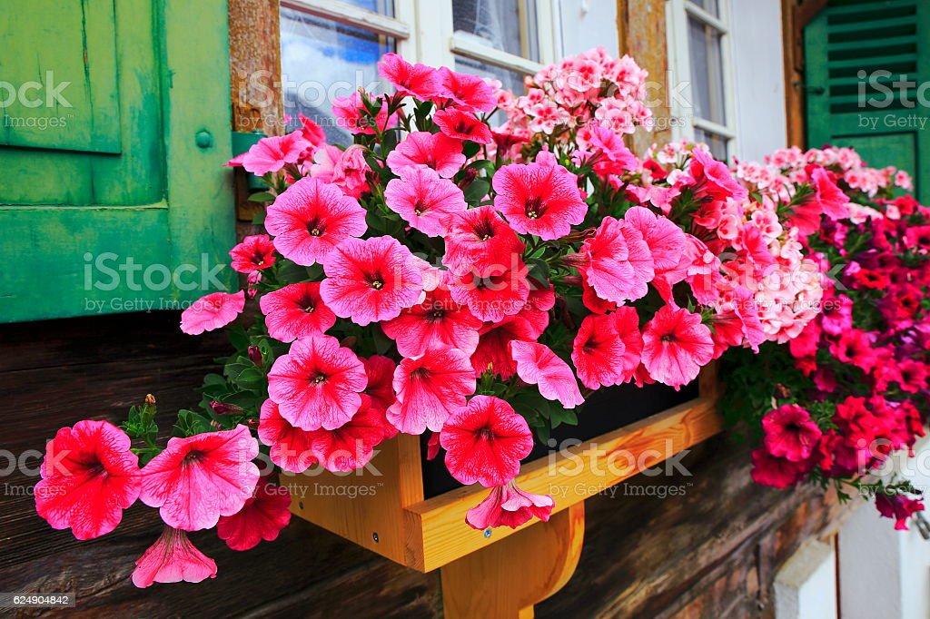 Colorful Bright flowers, rustic balcony flowerbed, Interlaken, Switzerland – Foto