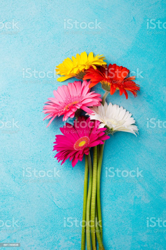 Colorful bunch of gerbera flowers on blue stone background. Top view. Copy space stock photo