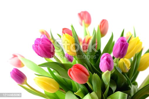 Colorful bunch of tulips.
