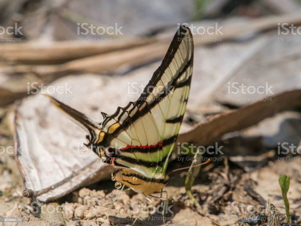 Colorful butterflies in the jungle stock photo