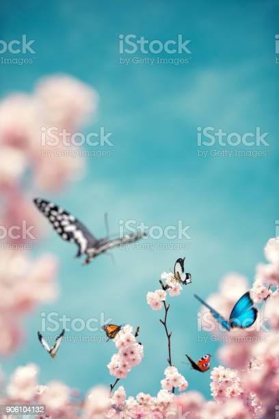 Colorful butterflies on cherry tree picture id906104132?b=1&k=6&m=906104132&s=612x612&h=5f2spmtx2gjx9tkoo ad323htje36xssdv7ysysikdg=