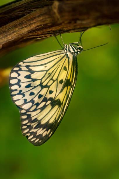 Papillons colorés contre les feuilles vertes - Photo
