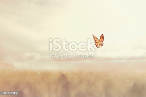 999676880 istock photo colorful butterfly flying free in the middle of nature 981802336