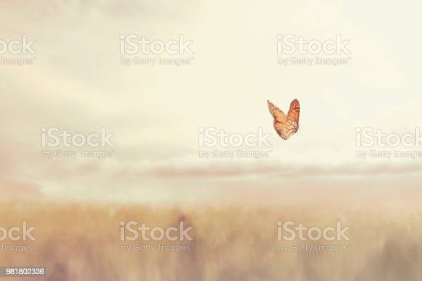 Colorful butterfly flying free in the middle of nature picture id981802336?b=1&k=6&m=981802336&s=612x612&h=3  lhsfwwmkwt3jszngnvb6yp qf5wriwnk yalvj5g=