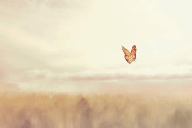 kolorowy motyl latający za darmo w środku natury - nadzieja zdjęcia i obrazy z banku zdjęć