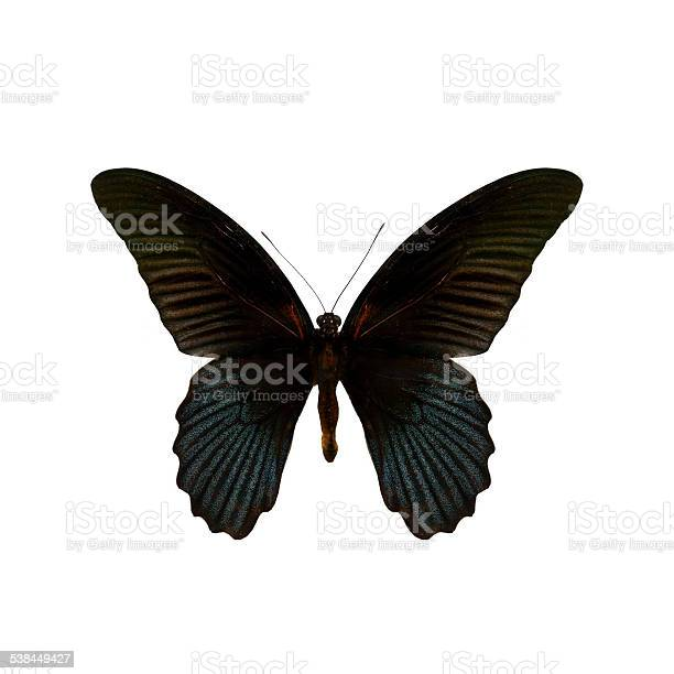 Colorful butterfly isolated on white picture id538449427?b=1&k=6&m=538449427&s=612x612&h=vjo3c n7l2k0w0xma9wqwcndjk1tfej9qludckft ro=