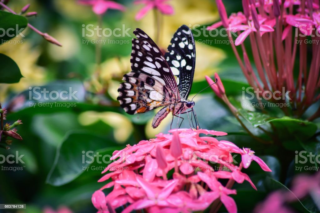 Colorful butterfly on flowers. stock photo