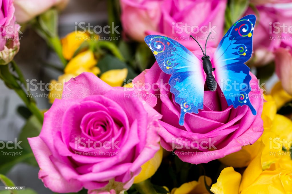 Colorful butterfly on Rose Flowers stock photo