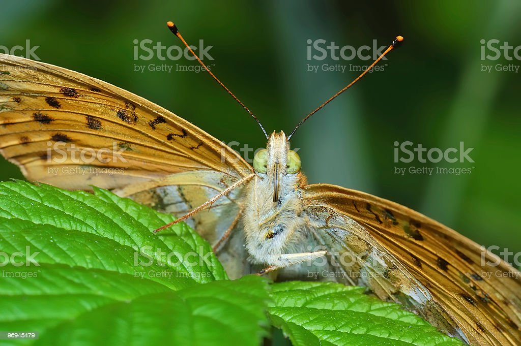 Colorful butterfly on the leaves royalty-free stock photo