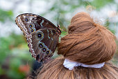 During a visit to a butterfly habitat in Lehi, Utah, one of the butterflies landed on a girl's hairbun and seemed very content to perch there for a long time.