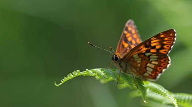 Colorful butterfly portrait picture id841840588?b=1&k=6&m=841840588&s=612x612&w=0&h=pgzkpa2wwuylzllmx98xranjkw0tw6ug4oukhafpsnm=