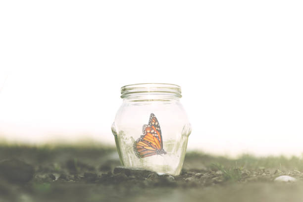 colorful butterfly trapped in a glass jar colorful butterfly trapped in a jar reincarnation stock pictures, royalty-free photos & images