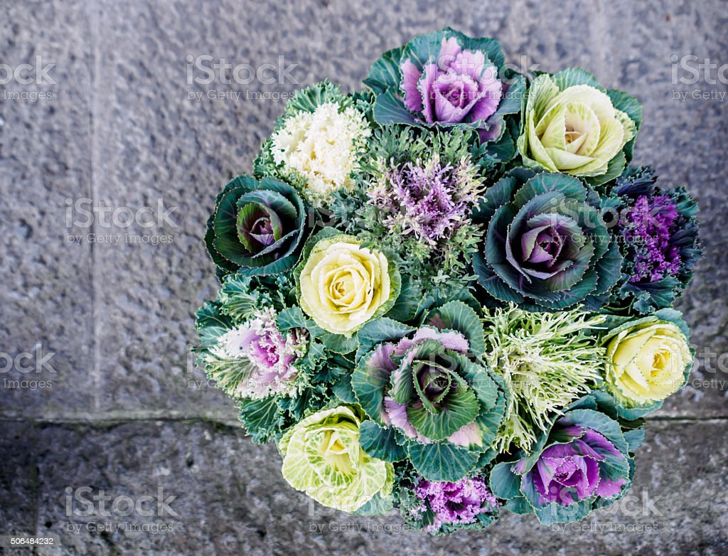 Colorful cabbage bouquet stock photo