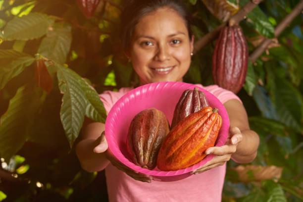Colorful cacao farm theme stock photo