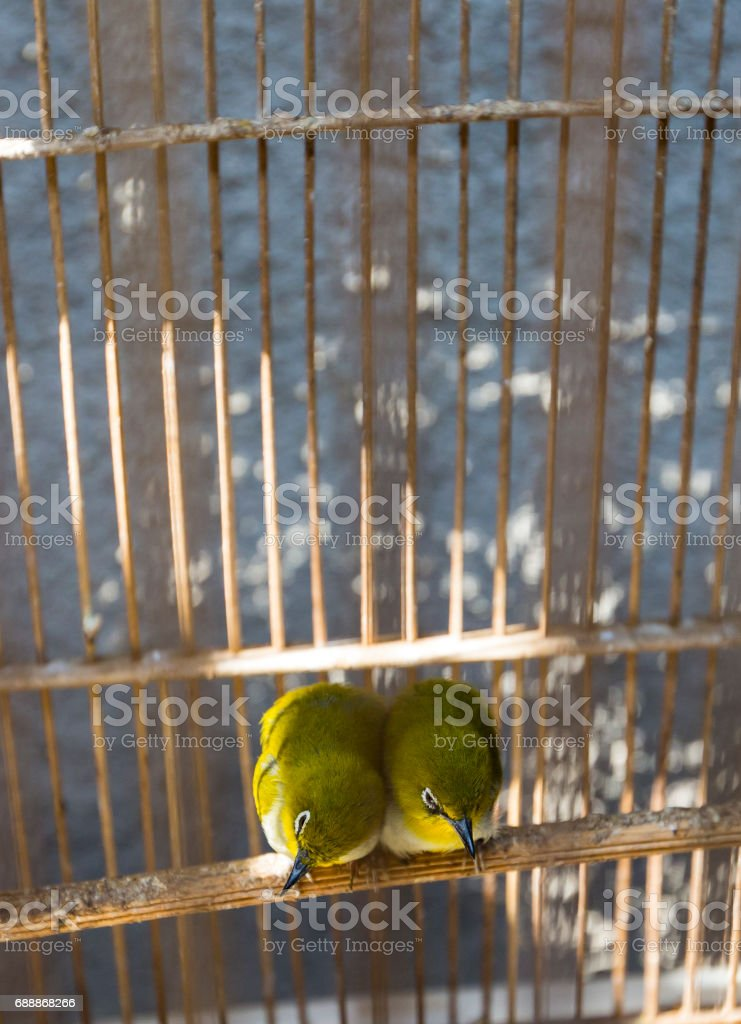 Colorful cages for sale at the bird market in Yogyakarta, Java, Indonesia. stock photo