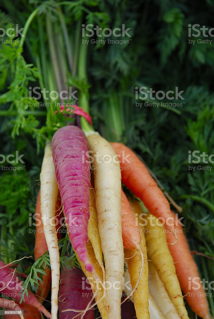 Colorful Carrots royalty-free stock photo