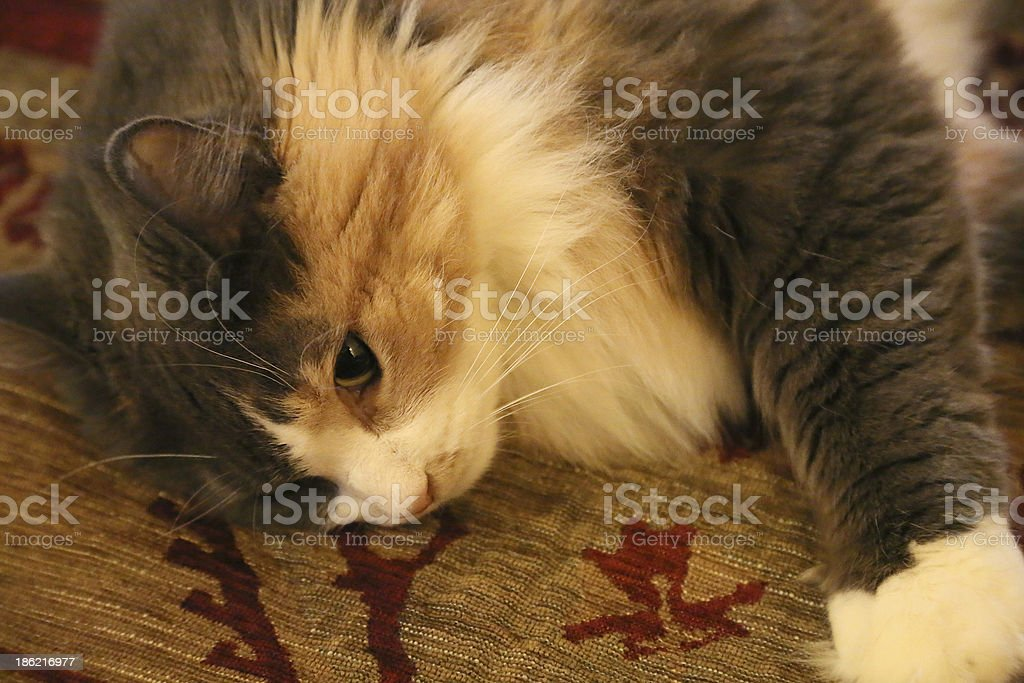 Colorful Cat stock photo
