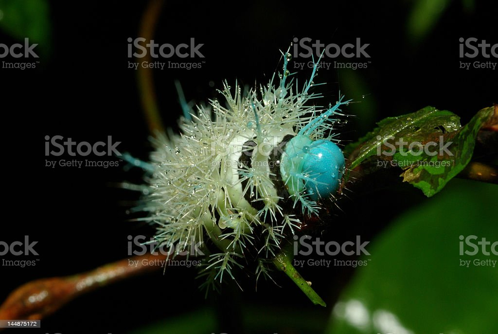 Colorful Caterpillar royalty-free stock photo
