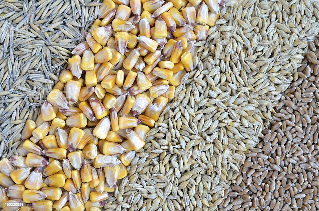 colorful cereal seeds as background royalty-free stock photo
