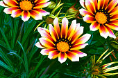 selective focus. Colorful chrysanthemum flowers on a background of the autumn landscape. meadow blooming