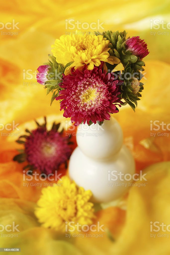 Colorful chrysanthemum royalty-free stock photo