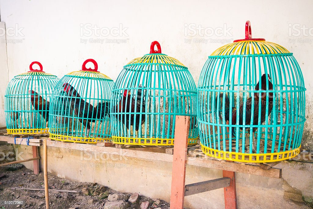 Colorful Cock Baskets stock photo