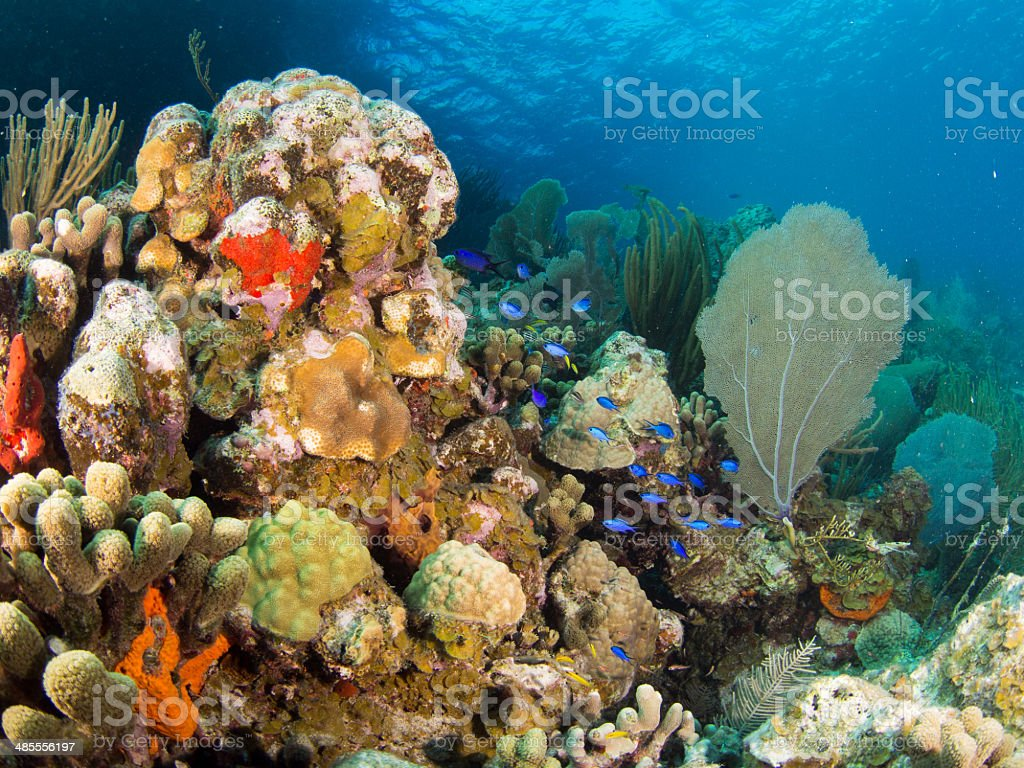 Colorful coral reef in the British Virgin Islands stock photo