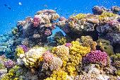 Coral Reef on Red Sea - Marsa Alam / Egypt.