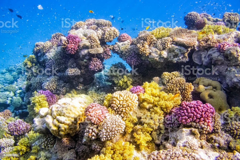 Colorful Coral Reef on Red Sea - Marsa Alam / Egypt stock photo