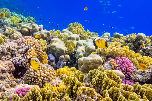 Coral Reef on Red Sea nearby Marsa Alam.