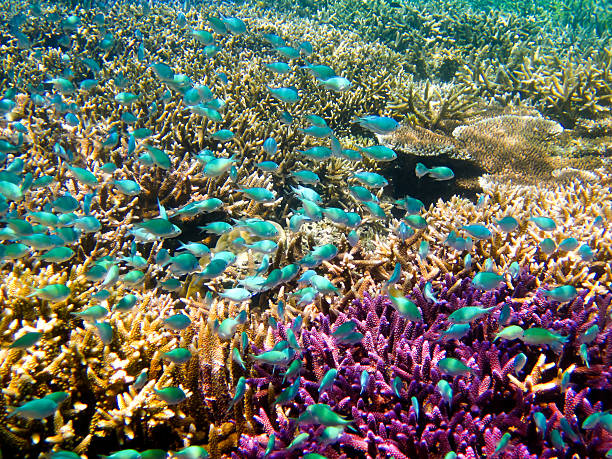 Colorful coral reef stock photo
