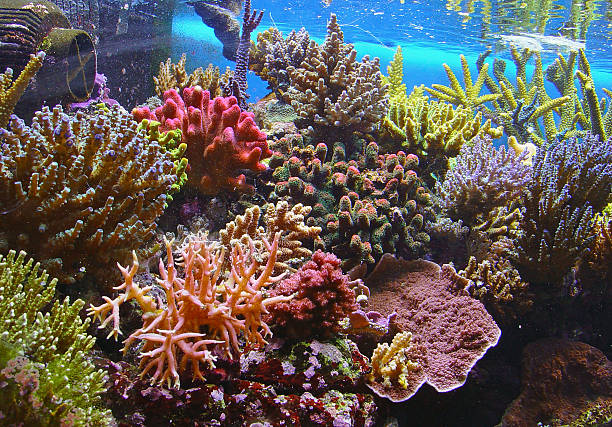 colorful coral reef underwater - great barrier reef stock pictures, royalty-free photos & images