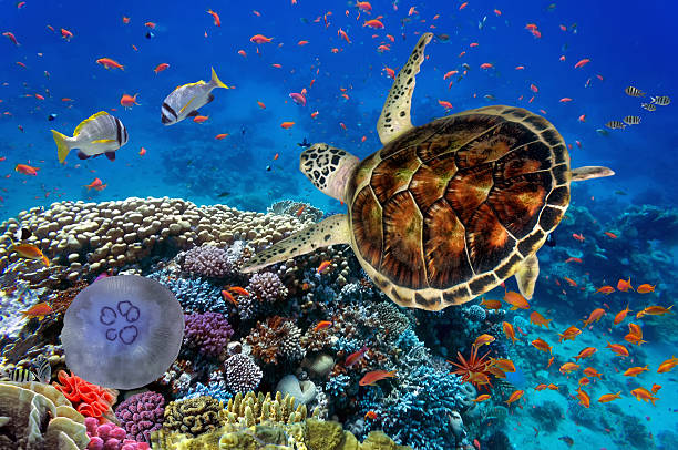 colorful coral reef with many fishes and sea turtle - tartaruga marina foto e immagini stock
