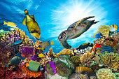 カラフルな珊瑚礁に多くの魚