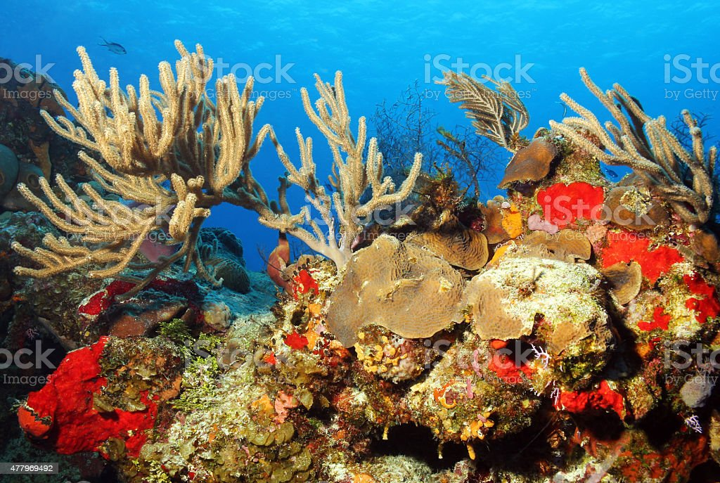 Colorful Corals against Blue Water and Surface, Cozumel, Mexico bildbanksfoto
