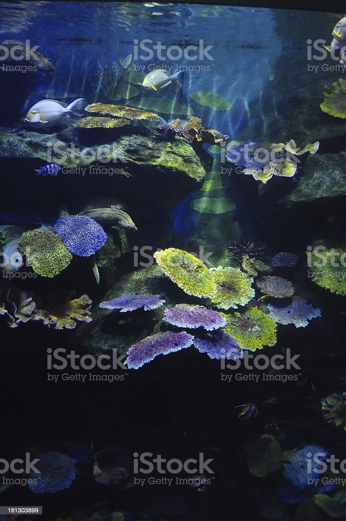 Colorful corals under the sea royalty-free stock photo
