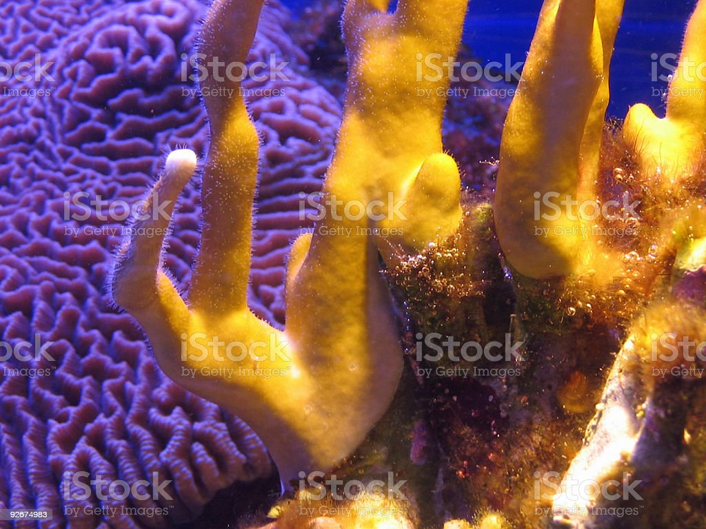 Colorful corals underwater royalty-free stock photo