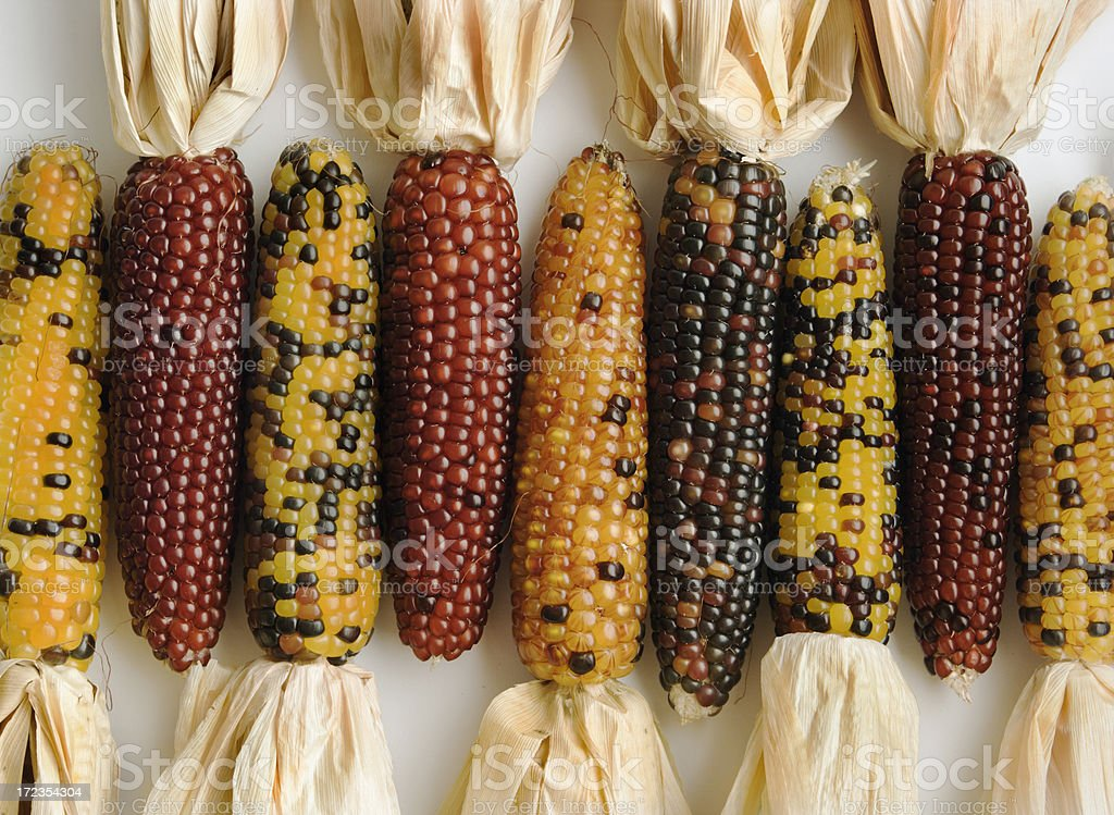 Colorful Corn Harvest royalty-free stock photo