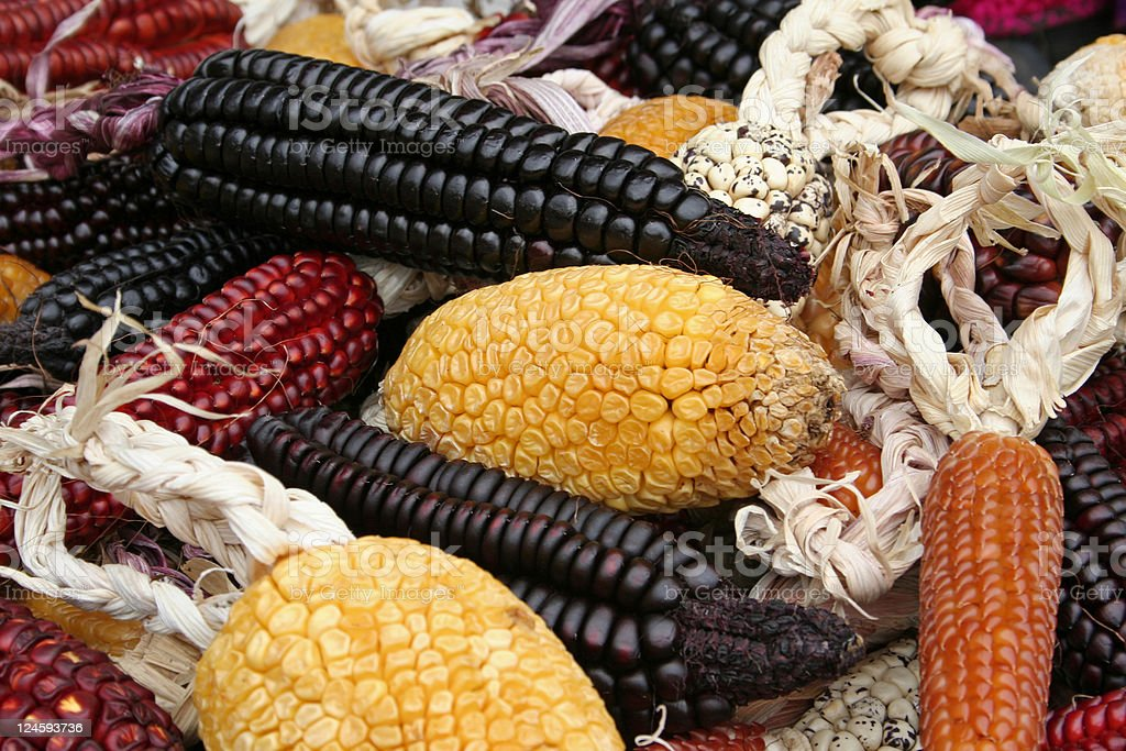 Colorful corn stock photo