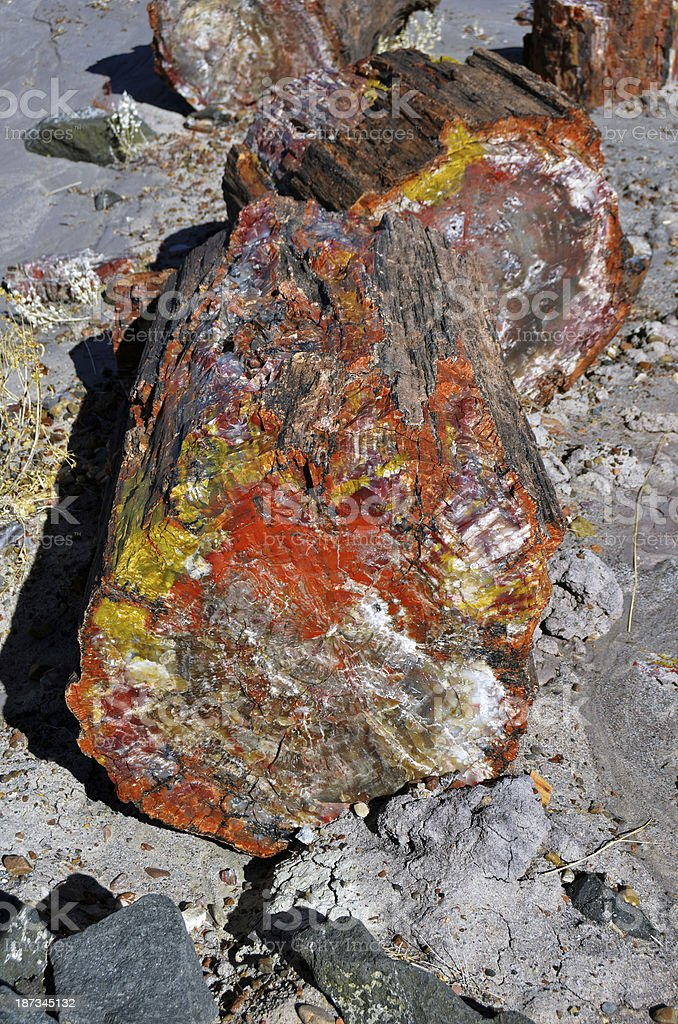 Colorful Crystalized Log in Petrified Forest National Park stock photo