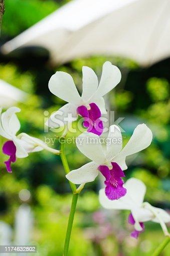 Thailand, Beauty, Blossom, Botany, Bouquet