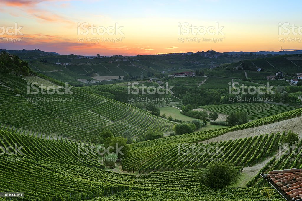 Colorful dawn over the vineyards stock photo