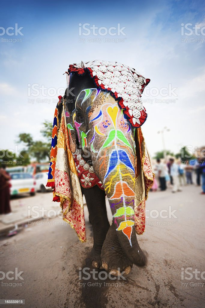 Colorful Decorated Indian Elephant walking in streets of Jaipur India royalty-free stock photo