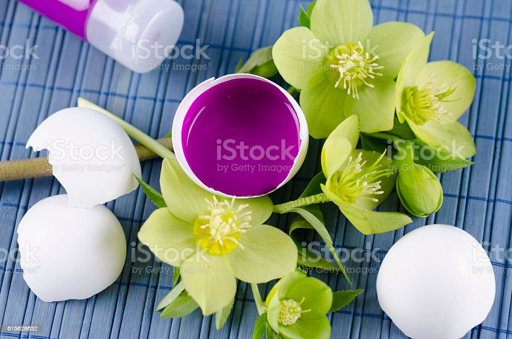 Colorful decoration for Easter with hellebore and egg shell stock photo